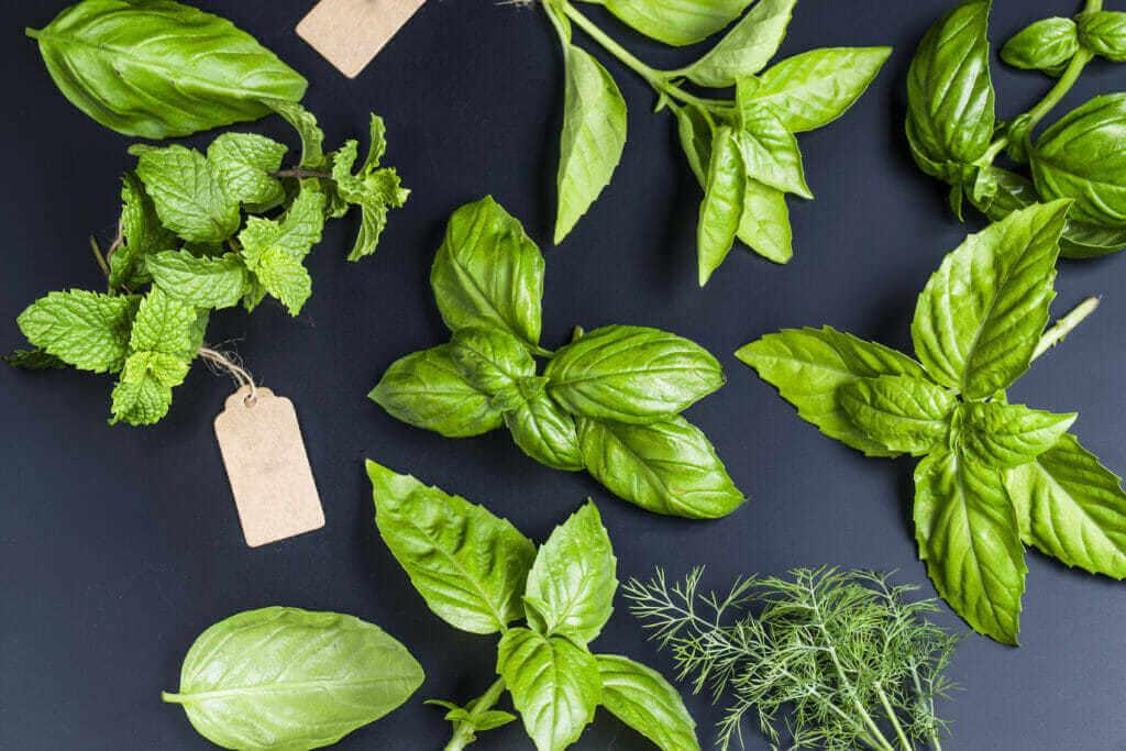 návod jak pěstovat bylinky
