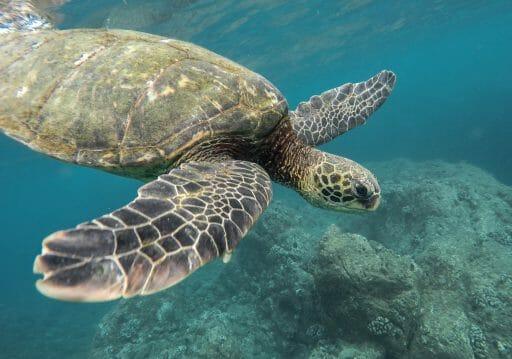 beautiful closeup shot large turtle swimming underwater ocean